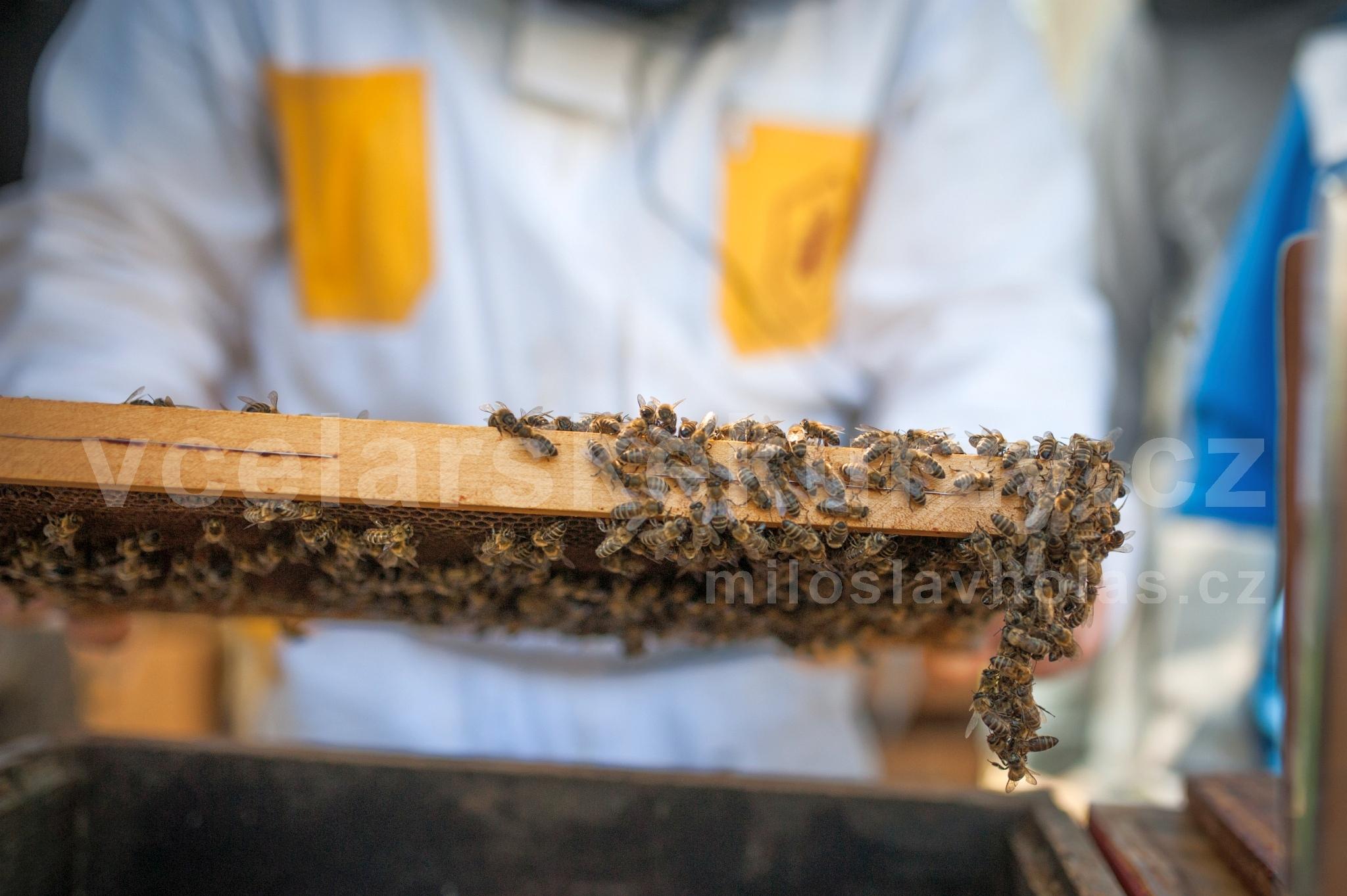 Včelařský kurz účastník drží plást