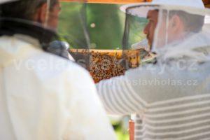 Včelaři si prohlížejí plást se včelami