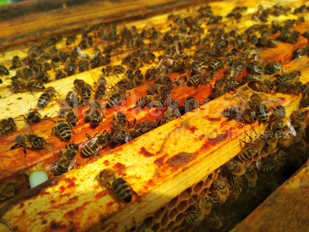 Včely a včelaření