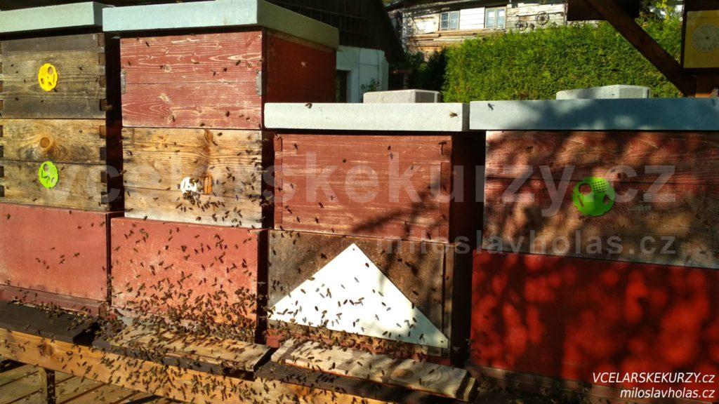 Loupeživé včely na česně